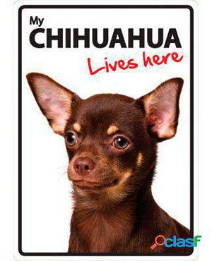 Magnet & Steel Señal A5 My Chihuahua Lives Here 100 GR