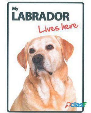 Magnet & Steel Señal A5 My Labrador Lives Here 100 GR