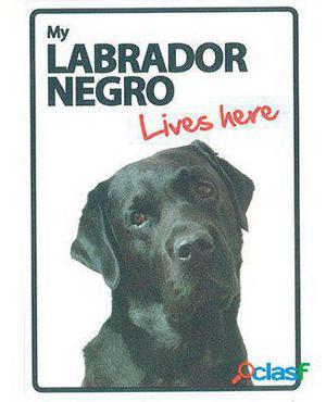 Magnet & Steel Señal A5 My Labrador Negro Lives Here 100 GR