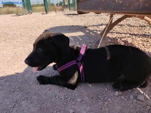 AdopcióN De Cachorro