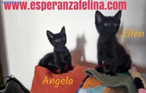 Angela Y Ellen. En AdopcióN FN