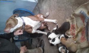 Estanfor Enrasado Con Labrador