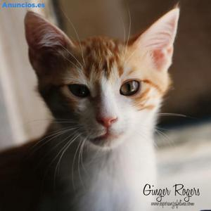 Ginger, Cachorrita Con Mucha EnergíA. ÁLava.