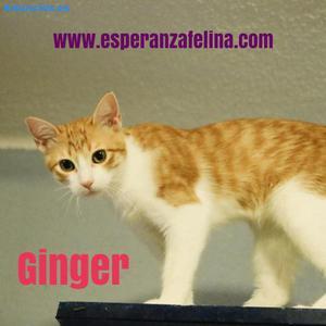 Ginger,Preciosa Rubia En AdopcióN (Alava,EspañA)