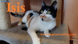 Isis Preciosa Gatita Tricolor En AdopcióN.(FN:)