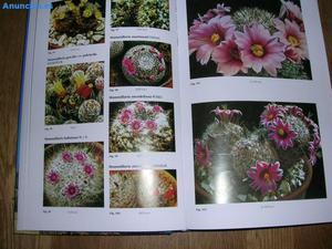 Libros De Cactus