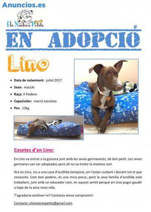 Lino Busca Una Familia En Adopcion