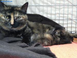 Mamá Y Gatitos En Adopcion