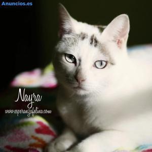 Nayra,Gata Con Ojos Grises En AdopcióN. ÁLava