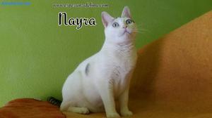 Nayra Gatita Especial En AdopcióN