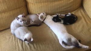 Regalo gatos preciosos. Muy dóciles y domésticos.
