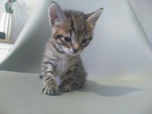 Somos cuatro gatitos bebés de un mes y buscamos hogar