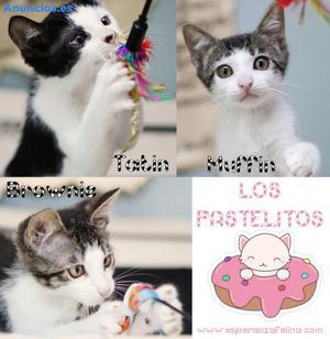 Tatin, Brownie Y Muffin En AdopcióN En ÁLava, EspañA