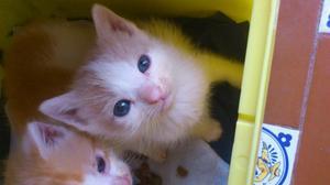 regalo gatito blanco y beige