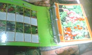 Vendo dos grandes ficheros de cultivo mi propio huerto por