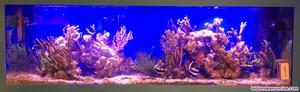 Acuario marino de 600 litros