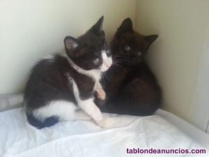 Mysha y moody (nacimiento julio ) en adopción madrid