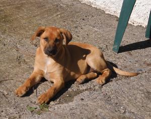 Regalo cachorros mestizos para 3 hogares cari - Las Palmas