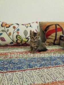 Regalo preciosa gatita