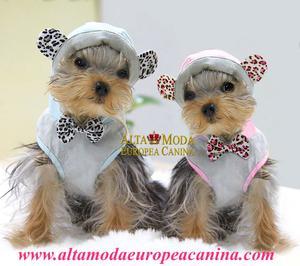 Ropa para Yorkshire, moda canina - Barcelona