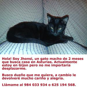 Se regala gato macho de 2 meses de color negro. - Asturias