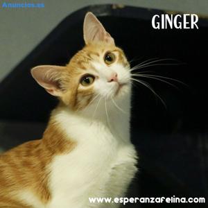 Ginger, Cachorrita En AdopcióN