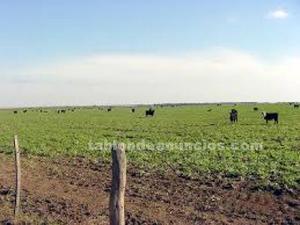 Permuto campo en argentina por propiedad en españa