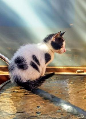 Regalo precioso gatito