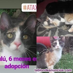 Lulú en adopción