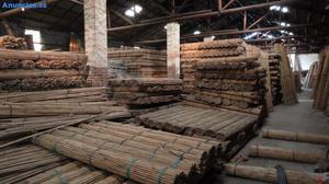 Tutor De Bambu,mm150cm