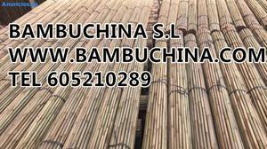 Tutores De Bambu Para Olivo Pistacho Almendro PiñA