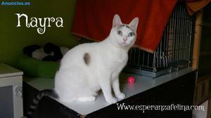 Nayra, La Bella, En AdopcióN. ÁLava, EspañA (F.N Aprox