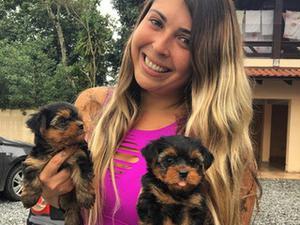 Regalo Yorkshire mini toy cachorros para la adopción