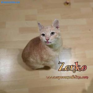 Zenko +Inmuno En AdopcióN ÁLava EspañA