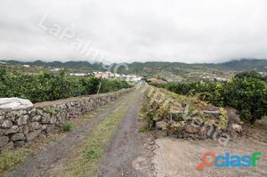ID 306 Impresionante finca con cultivo de Aguacates y