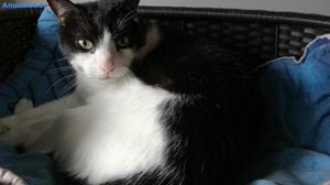 Boone, Precioso Gato Busca Hogar, ÁLava