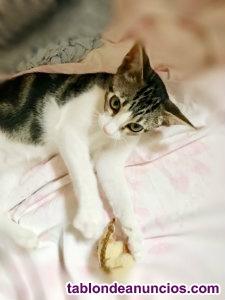 Gatito cariñoso en adopcion