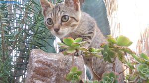 Tigreton Busca AdopcióN Permanente