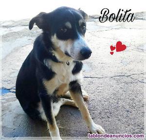 Bolita (en adopcion)