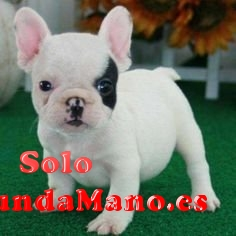 Regalo Bulldog Francés Toy Para Adopcion