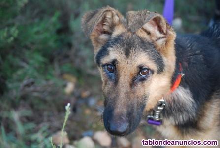 Manu,cachorrete,en busca de hogar en adopcion