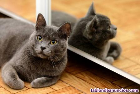 Precioso y tímido gato en adopción