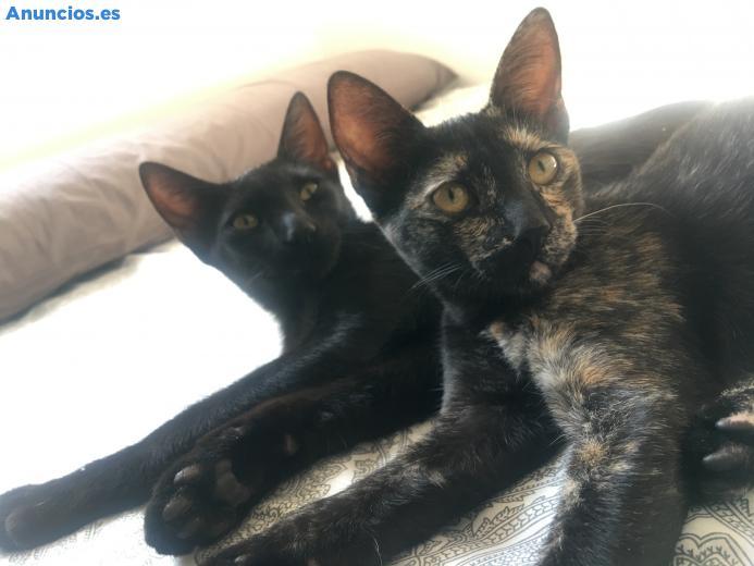 2 Gatitos De 4 Meses Necesitan Hogar!!