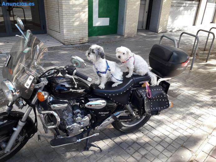 Adopcion De Dos Mascotas