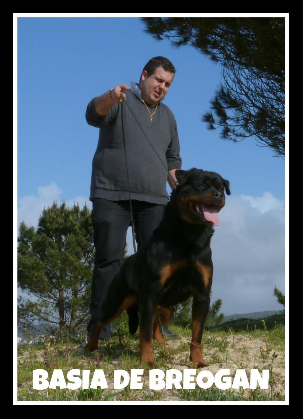 Cachorros de rottweiler - Madrid