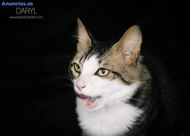 Daryl, Precioso Gatito Busca Hogar. FN: