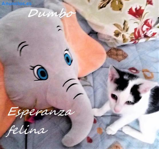 Dumbo, Gatete Busca Hogar. Alava (F.N )