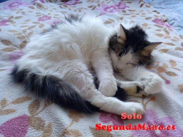 Gatito con tres meses y medio