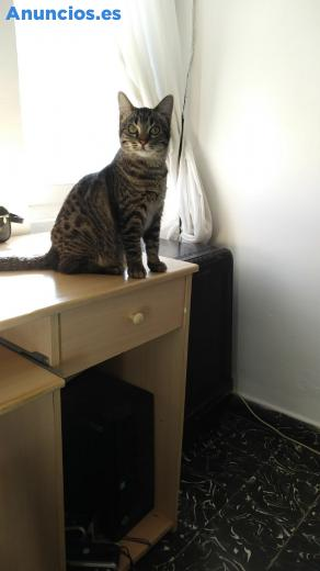 Gato En AdopcióN 8 Mesesymuy Bueno