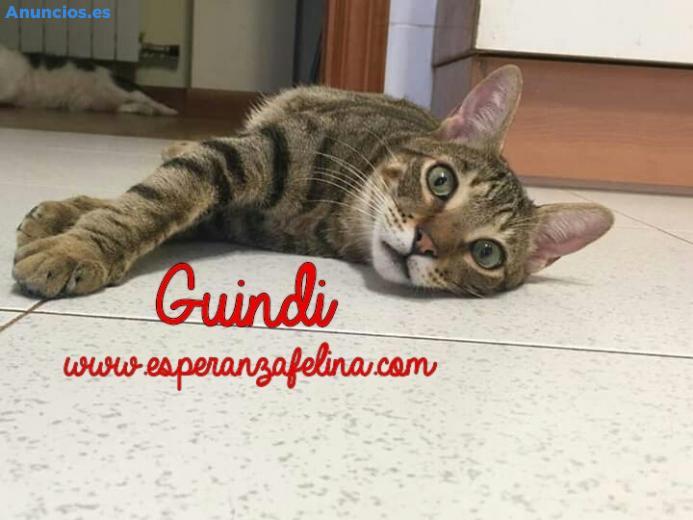 Guindi En AdopcióN ÁLava - EspañA